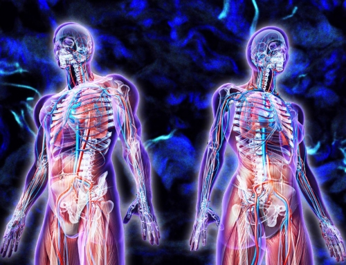 Newly Discovered Organ and Buddhist Vital Energy Science
